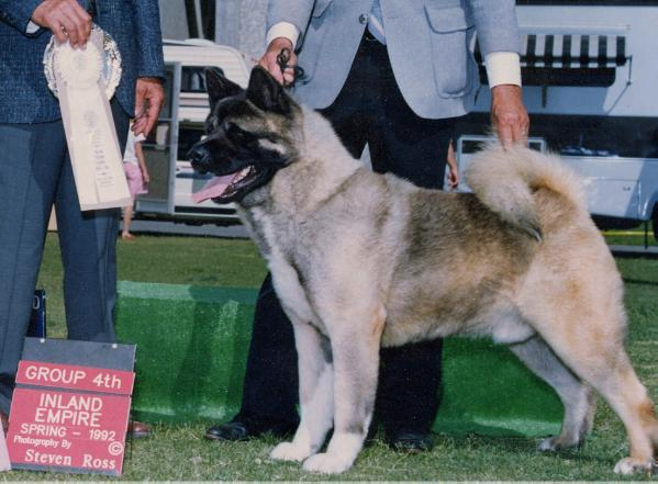 AKC/CAN CH Samkitas The One That Counts