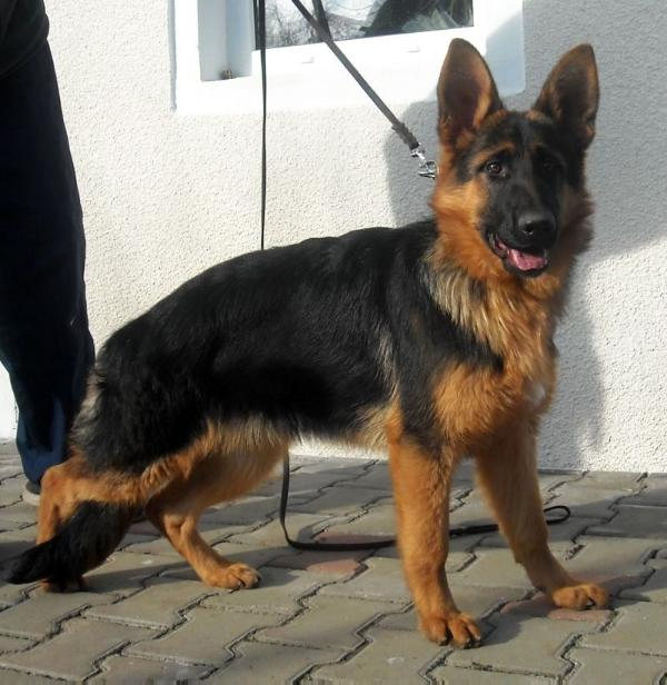 Augustus Canis Jully